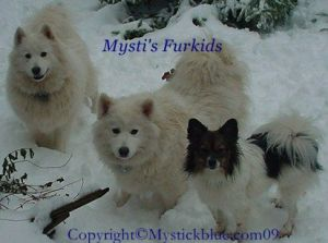 My furkids